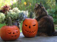 アメリカのハロウィンを思いっきり楽しむ、5つの方法!