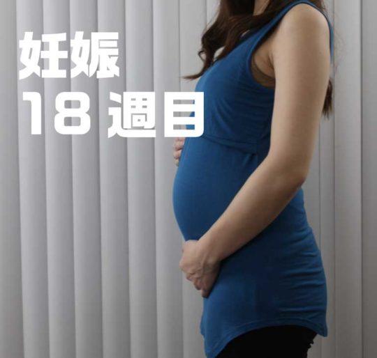 妊娠5ヶ月、18週目のお腹の写真