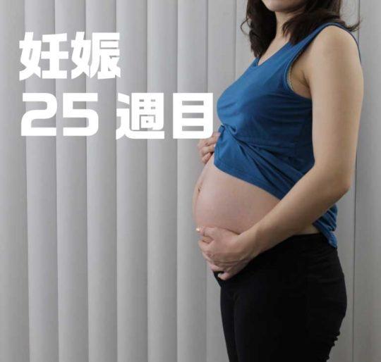 妊娠7ヶ月、25週目のお腹の写真